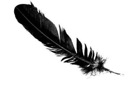 Symbol Meaning Of Seeing A Black Feather Transition Or Black Feather Meaning