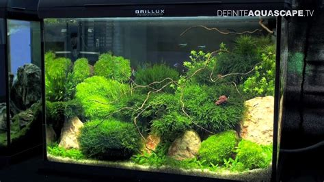 Aquascapes Com Aquascaping Best Planted Aquariums Of Petfair 2011 Part