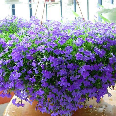 pianta fiorita tutto l anno fioriera in ombra fiorita tutto l anno forum di