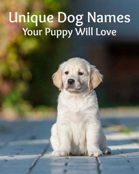 boy golden retriever names unique names puppy names for your boy noms de chien abonn 233 e s et