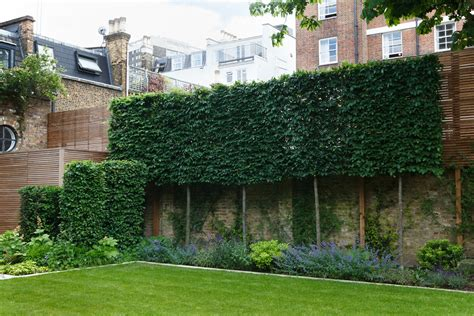 Pool And Outdoor Kitchen Designs Pleached Hedge Randle Siddeley