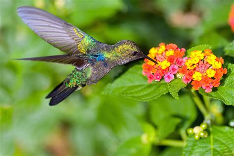 the ultimate dining guide for hummingbirds garden