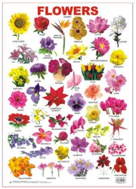 Variety Of Flowers For Garden Different Types Of Flowers With Names Chart Www Imgkid The Image Kid Has It