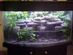 Goldfish In Vase Best 25 Axolotl Tank Ideas On Pinterest Fish Tank Fish