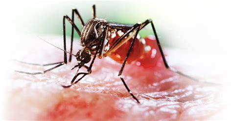 imagenes groseras sobre el chikungunya chikungunya el terror de las vacaciones semana com