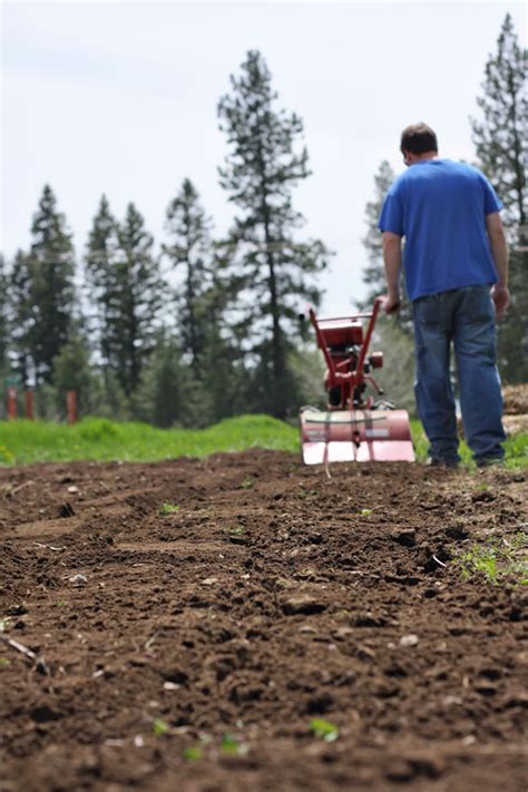 garden tilling soil alternatives to tilling a garden - When To Till Soil For A Vegetable Garden