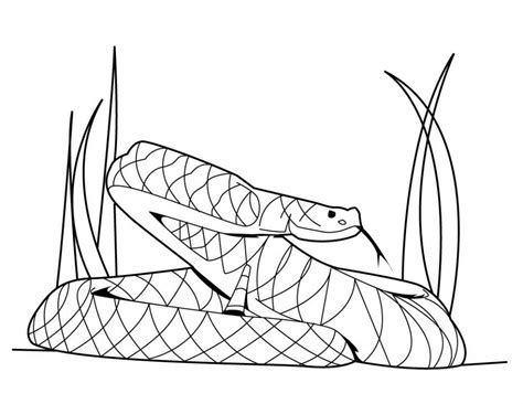 snake coloring pages free printable snake coloring pages for
