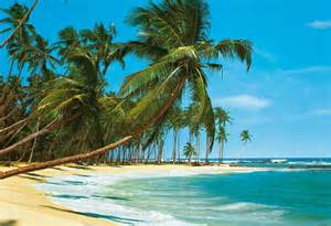 Beach Scene Wall Murals Beach Murals Wall Murals Of Tropical Beach Scenes Review