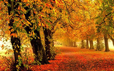 colorful trees nature autumn forest park trees leaves colorful road