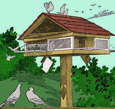 Free Pigeon House Plans All Free Plans From Stan S Plans