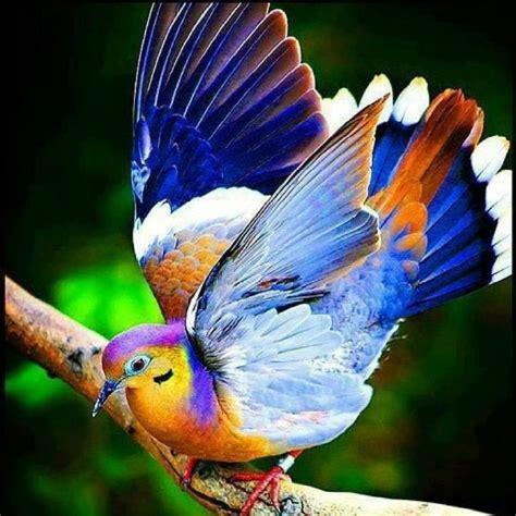 big colorful bird colorful bird pixdaus
