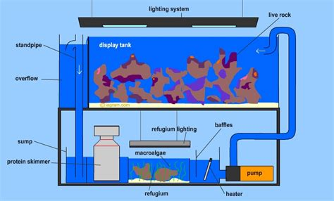 aquarium refuge design diagram of a modern reef aquarium with sump and refuge