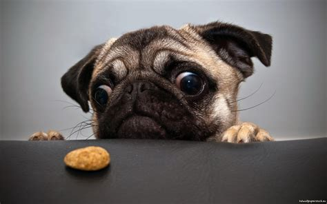 funny dog wallpapers wallpaper cave funny dog wallpapers wallpaper cave