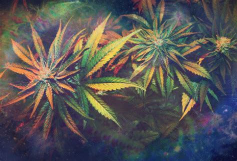 imagenes animadas weed weed plant gif tumblr