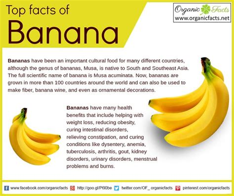 small banana vs regular banana difference redflagdeals com forums bananas organic vs conventional sgi food preservation
