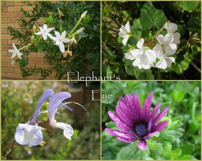 elephant's eye: april showers bring us flowers 2012