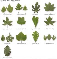 how to identify fruit trees by leaf insidebookofleaves p35 artplantae