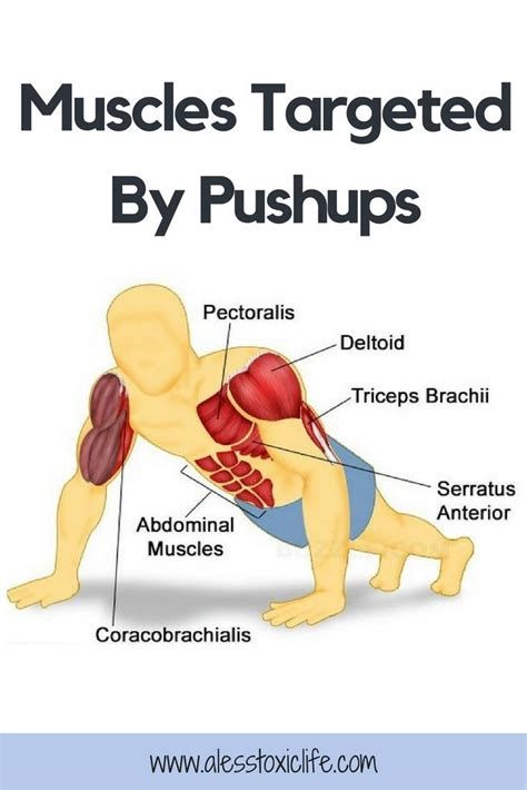 benefits of doing push ups why i pushups why you should what muscles