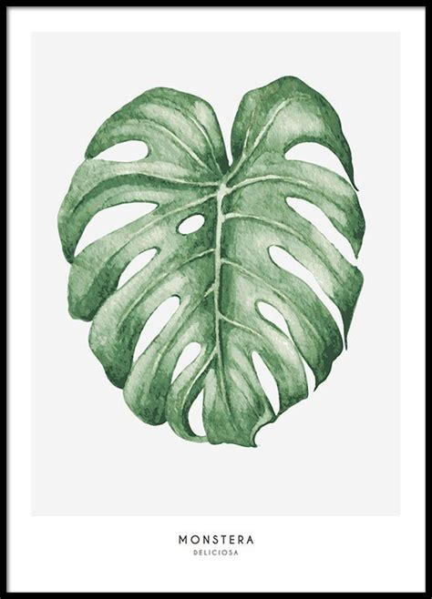 Poster Monstera posters with patterns botanical prints print with plants