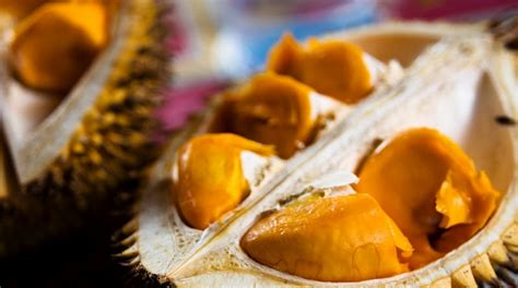 Ohome Bunga Artifisial Telur Besar Tinggi 40cm An B000318 1 hortikultura buah lai elai