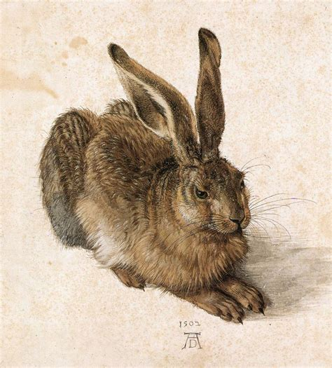 African Print Upholstery Fabric File Durer Young Hare Jpg Wikipedia