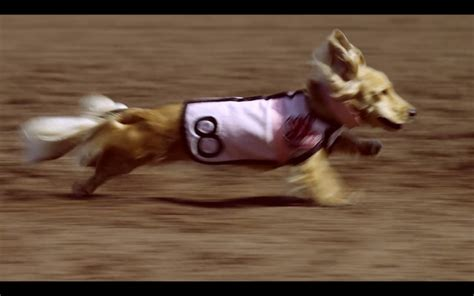 wiener nationals screenshot gallery 1 reel dogs