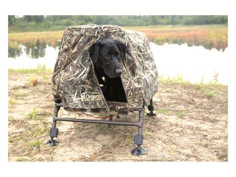 elevated alt in dogs momarsh invisilab elevated blind leg kit upc 896306000383