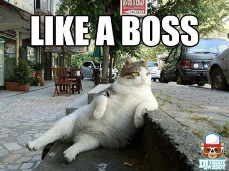 Funny Fat Cat Memes - fat cat chillin on the sidewalk like a boss cat meme an