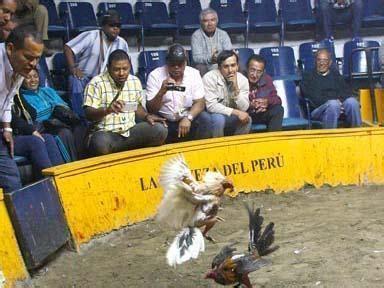 gran jornada gallistica de 40 peleas de gallos en santiago gallos chilenos y peruanos lidian grandes peleas taringa