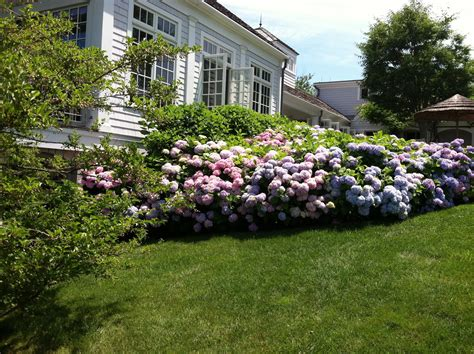 landscaping with hydrangeas ideas bistrodre porch and