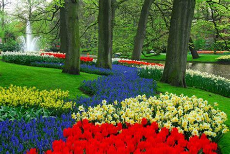 parco fiorito in olanda sboccia la primavera apre il parco fiorito