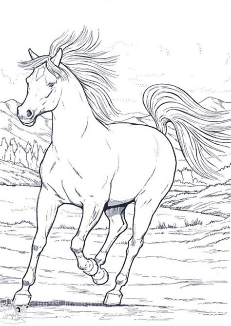 wild horses colouring pages