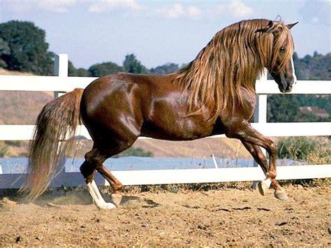 andalusian colors images de chevaux page 2