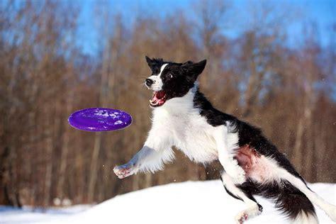 invented  frisbee pitara kids network