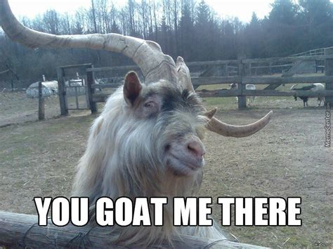 Goat Memes - what i am willing to do for a pet goat video page