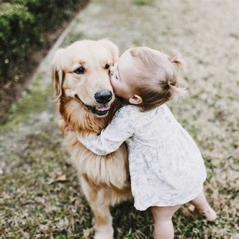 golden retriever and baby 25 best ideas about golden retriever filhote on filhote de golden
