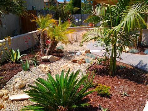 drought tolerant backyard designs drought tolerant landscape design idea with palms agave