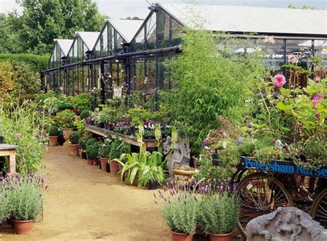 Olive Garden Rocky Mount Nc by 17 Best Images About Nursery On Plant
