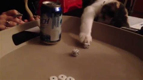 full house in yahtzee cat helps owner get full house in yahtzee youtube
