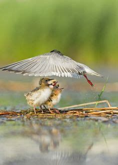 images of love birds in rain 1000 images about rainy days love on pinterest rainy