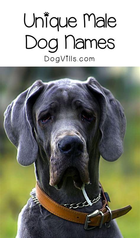 boy dog names ideas  pinterest names  dogs
