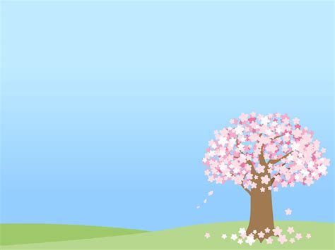 Cherry Blossoms by