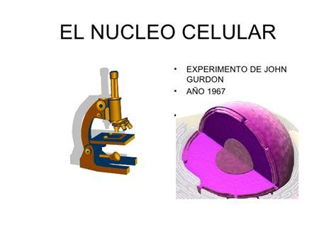 pics photos imagen tomada funciones nucleo ecro el nucleo celular 2 186 4 186 medio