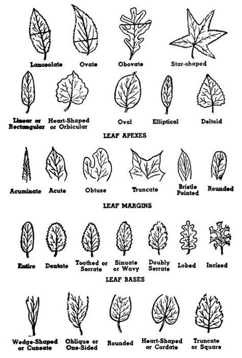 leaf pattern identification types of leaves environmental education pinterest