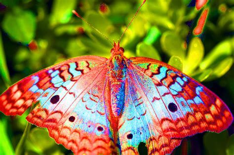 Naturally Vibrant Natures Animals Colorful Animal