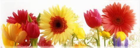 imagenes de flores bonitas para portada floreadas im 224 genes de primavera para portada de facebook