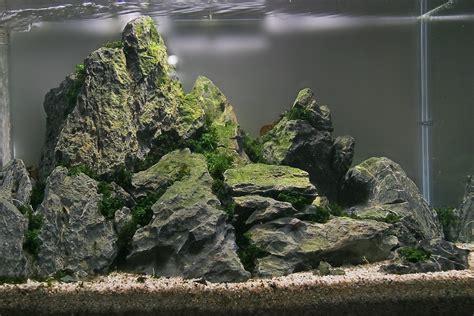aquascaping stones image gallery seiryu stone