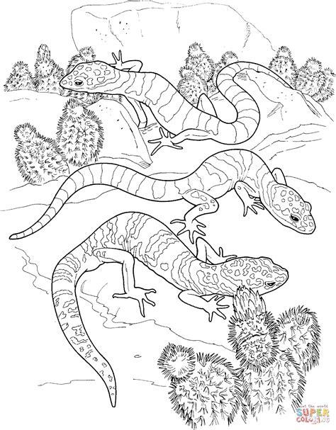 cactus  lizard super coloring