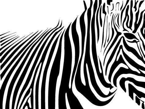 zebra print wallpaper 2746 1024x768 px hdwallsource