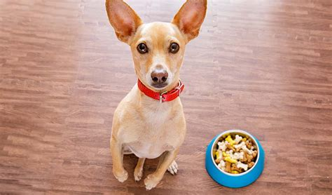 vet recommended puppy food best food for chihuahua 9 vet recommended brands